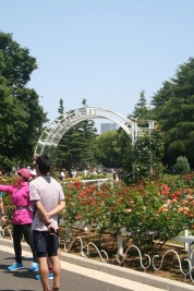 Roses at the park. Lots of folks taking pictures. The roses are very much like Golden Gate Park in San Francisco.