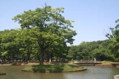 Yoyogi Park http://en.wikipedia.org/wiki/Yoyogi_Park