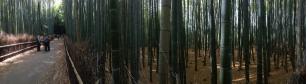 Past the garden is bamboo forest.
